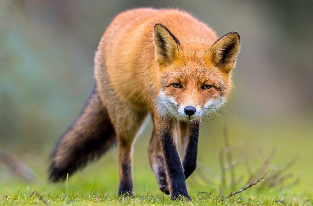 Dzikie zwierzęta w mieście – jak z nimi postępować?