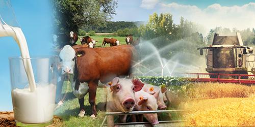 plakat ze zwierzętami hodowlanymi